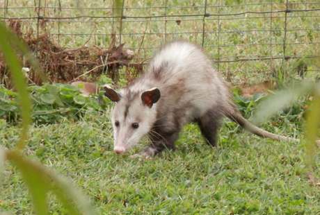 Need Help Removing Possums?